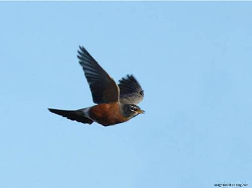 Fly, Robin, Fly