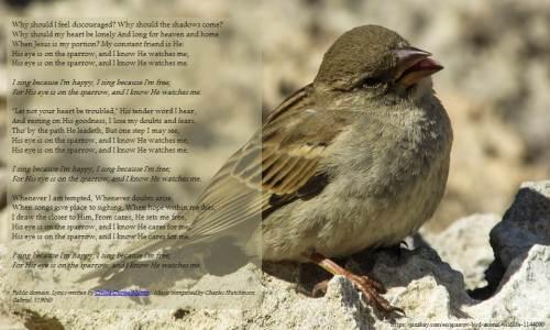 022017-joy-dekok-i-sing